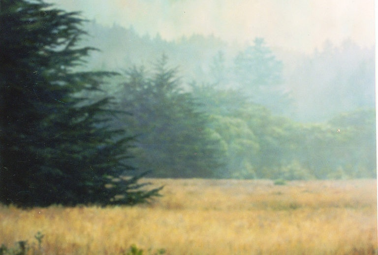 "Empty Field, 2004, oil on canvas, 36""x48"""